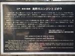 滝野川種 001.JPG
