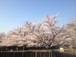 石神井川_2412.JPG