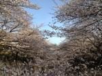 石神井川__.JPG